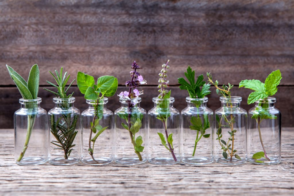 Bottle of essential oil with herbs holy basil flower, basil flower, rosemary, oregano, sage, parsley, thyme, and mint set up on old wooden background.